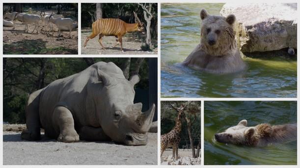 photos zoo